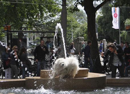 Dog in Fountain